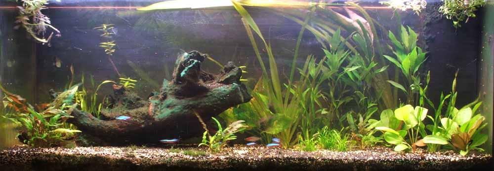 klein aquarium zuurstof